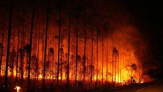 Bosbrand naast het zendingscentrum